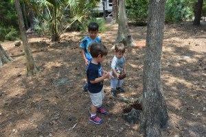 Rounding up the pinecones